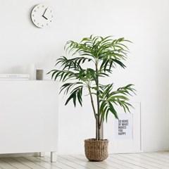 자바조화나무