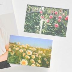 가든플라워2 포스트카드 엽서세트 6P