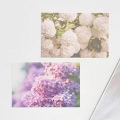 가든플라워 포스트카드 엽서세트 12P