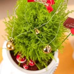 FN7738 크리스마스 율마화분