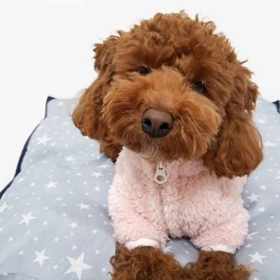 강아지 보아후리스