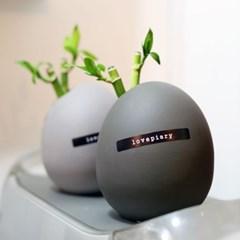 미니화분 2종세트 개운죽 에그화분 수경식물