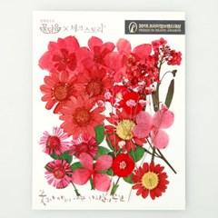 [압화 꽃모음 - A타입] 레드베리 꽃모음