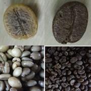 유기농 발효커피(잼커피) 드립백