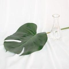 대형 몬스테라 생화(공기정화 식물)