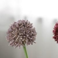 [포홈] 알륨 가지 (조화/꽃다발)_(1181272)