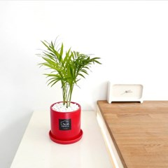 봄맞이 반려식물 테이블야자 실내공기정화식물 플랜테리어