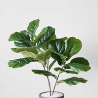떡갈 고무나무 인테리어 화분세트