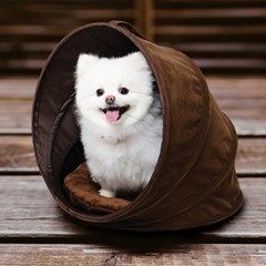 코코조조 반려동물 소프트 팝업하우스