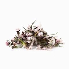 채온 꽃차 벚꽃차