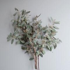 씨드 유칼립투스 생화 인테리어 식물