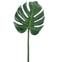 몬스테라 생화 그린 인테리어 공기정화 식물