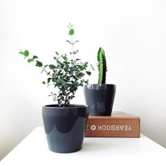 Saturday - 휴식을 주는 공기정화식물 3종세트