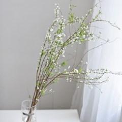 설유화 꽃 그린 인테리어 생화