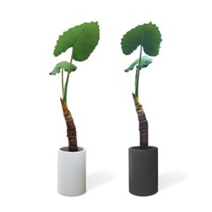 Tropical Leaf 대형알로카시아 FRP화분