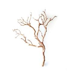 everlasting nature-작품이 된 천연 나뭇가지