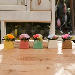 JULIA CARNATION_프리저브드플라워 카네이션(시들지 않는 꽃)