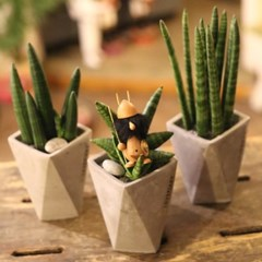 미니공기정화식물 Simple 스투키+폴리곤 시멘트화분