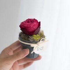 프리저브드플라워 미니 장미 화분 인테리어소품