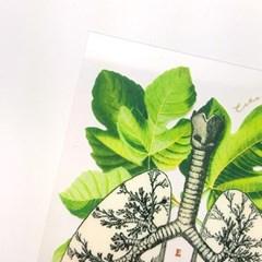 [에코드소울] 비세라가든 투명 카드 - Lungs