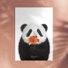 플라워포켓 팬더