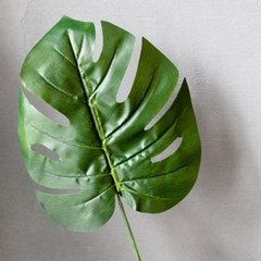 몬스테라 잎 1p