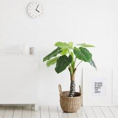 [룸앤홈] 조화나무시리즈