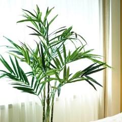 시원한 여름인테리어 대형 아레카 야자나무