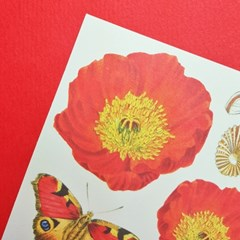 [에코드소울] Paper Sticker - Jardin Red