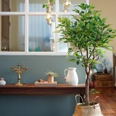 세상 귀여운 미니 벤자민나무