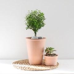 머틀 허브 이태리토분 (미르틀 머틀허브나무)