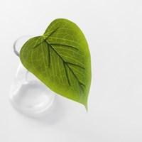 미니 스몰 카라 leaf