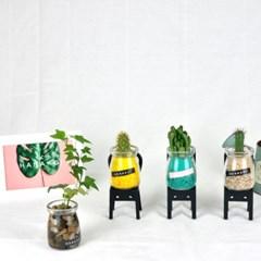 하나코이(Hanakoi)_수경재배_미니유리병_아이비 수경식물