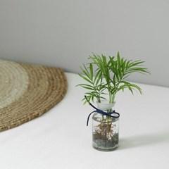 수경식물 - 테이블야자 투명시약병set_(591006)