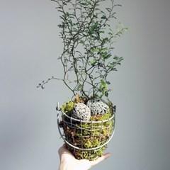 (광진) 이끼를 이용한 식물 식재
