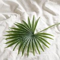 야자수잎 트로피컬 가지(조화)_(1288528)