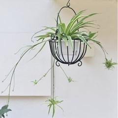 행잉플랜트 접란 바스켓 세트 카페 인테리어 공기정화식물 (대형)