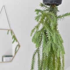 행잉플랜트 라이코포디움 거베리 실내 인테리어 식물 (대형)