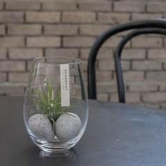 틸란드시아 식물 테라리움 Stone 인테리어