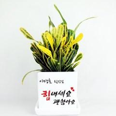 [그린조아]축하,선물,승진 맞춤 미니화분 실내공기정화식물 모음전