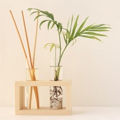 따로또같이 디퓨저 테이블야자 수경식물