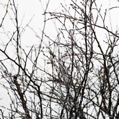 드라이플라워-느티나무