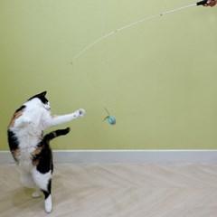 묘심 고양이장난감 낚시대장난감 방울새낚시대+방울새리필 2개