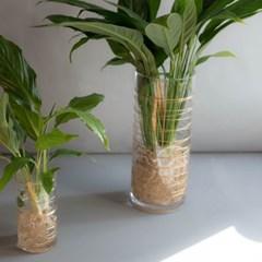 스파티필름 공기정화 식물 수경 인테리어 소품 (L)