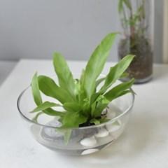 아비스 수경 식물 인테리어 소품