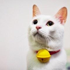 nuke cat drop 대만 실리콘 고양이 강아지 방울