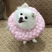 [갓샵 푹신100% 펫 쿠션넥카라] 강아지넥카라 고양이넥카라