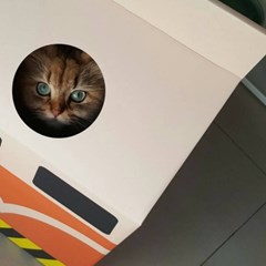 nuke cat house 대만 우유팩 고양이집 전철모양 숨숨집