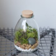 이끼 가든 테라리움 백투더퓨처 Eco-Bottle 2.1