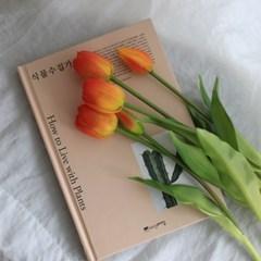 로맨틱 조화튤립 5종